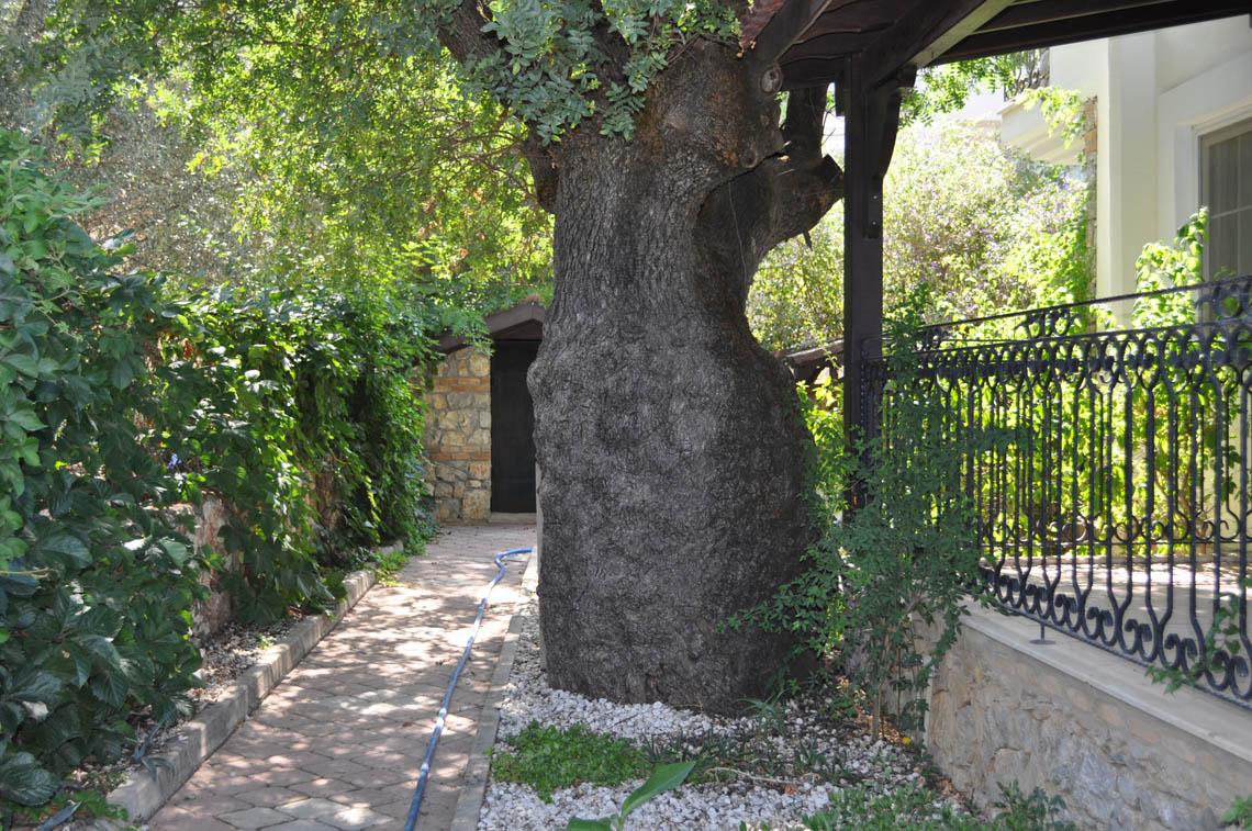Meşe Ağacı Apart